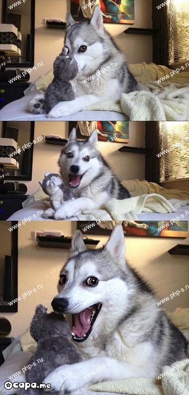 Позитивные собаки